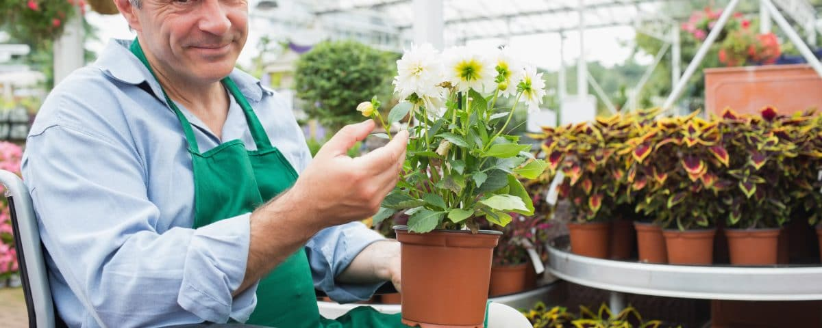 Gardne center worker in a wheelchair holding a flower pot in a greenhouseGardne center worker in a wheelchair holding a flower pot in a greenhouse