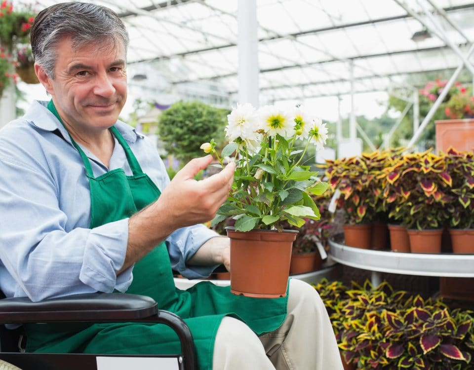 Garden center worker in a wheelchair holding a flower pot in a greenhouseGardne center worker in a wheelchair holding a flower pot in a greenhouse